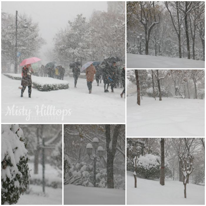 winter, snow, photography, collage, misty hilltops photography